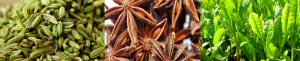 fennel star anise green tea